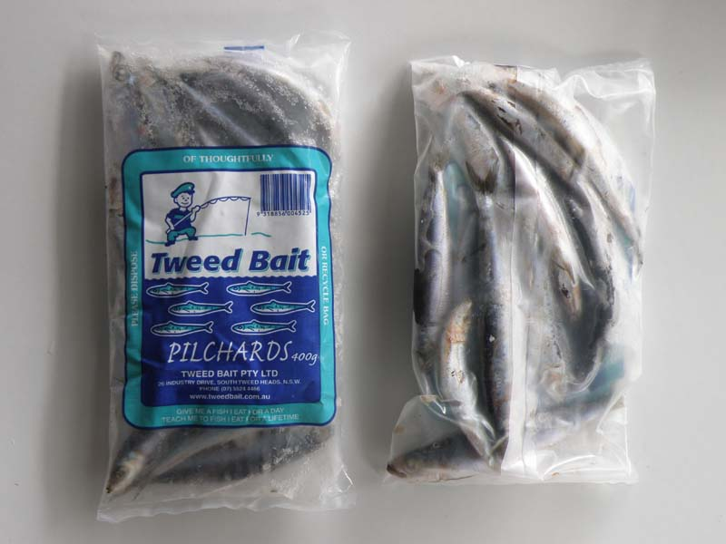 Pilchards | Tweed Bait | Fishing Bait & Tackle Suppliers